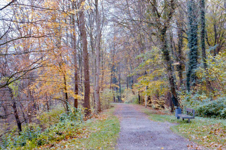 autumn path with trees
