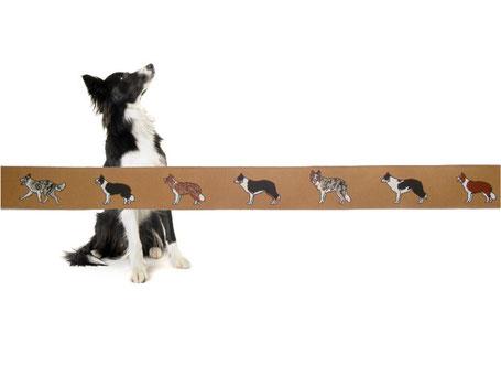 Webband Hund Border Collie Borte