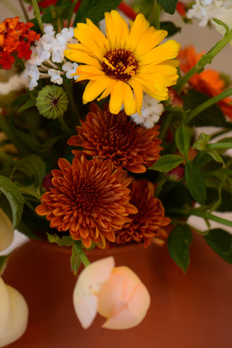 in a vase on monday, iavom, monday vase, small sunny garden, desert garden, amy myers, photography, garden blog, chysanthemum