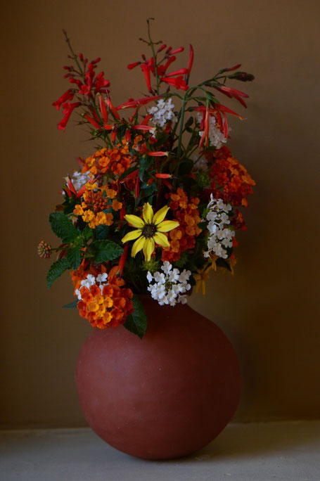 monday vase, in a vase on monday, iavom, small sunny garden, amy myers, desert garden, berlandiera, lantana, cuphea, justicia, chrysactinia, russelia, photography, handbuilt, ceramics, pottery, earthenware