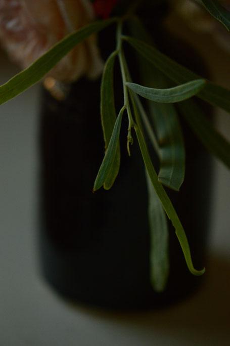 Foliage, Acacia salicina