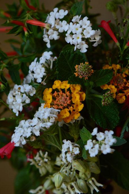 small sunny garden, desert garden, amy myers, in a vase on monday, monday vase, iavom, garden blog, lantana