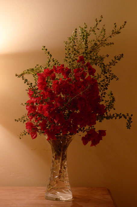 bougainvillea, small sunny garden, desert garden, monday vase, ivom, amy myers, photography