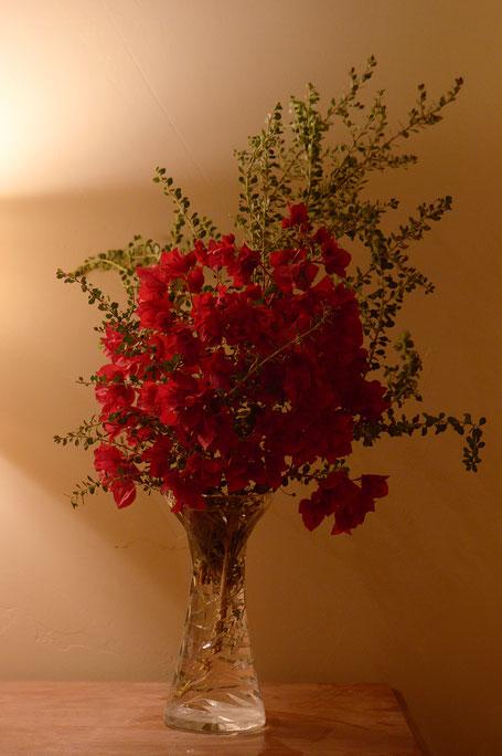 bougainvillea, small sunny garden, desert garden, monday vase, ivom, amy myers, photography