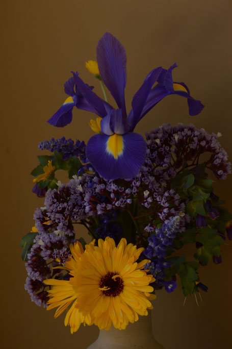 small sunny garden, desert garden, amy myers, photography, garden photography, in a vase on monday, iavom, monday vase, iris, dutch, blue magic, calendula
