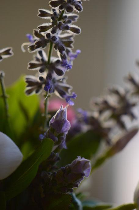 small sunny garden, desert garden, in a vase on monday, monday vase, garden blog, jasmine, sambac, arabian, amy myers, photography