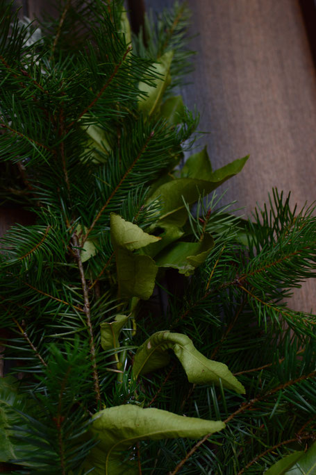 lemon foliage with douglas fir