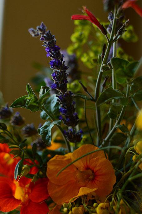 small sunny garden, desert garden, amy myers, photography, in a vase on monday, iavom, monday vase, nasturium, lavender, goodwins creek gray