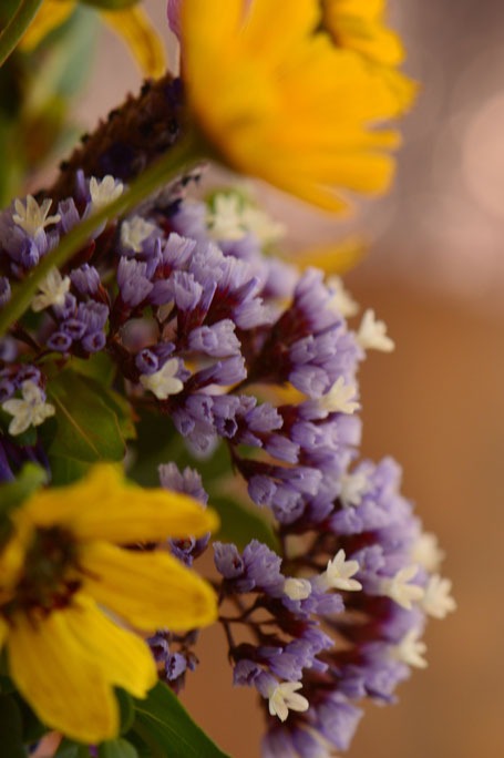 small sunny garden, desert garden, monday vase, in a vase on monday, iavom, photography, amy myers, limonium perezii, sea statice