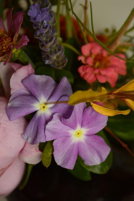 in a vase on monday, monday vase, desert garden, small sunny garden, amy myers, photographer, photography, catharanthus roseus, vinca