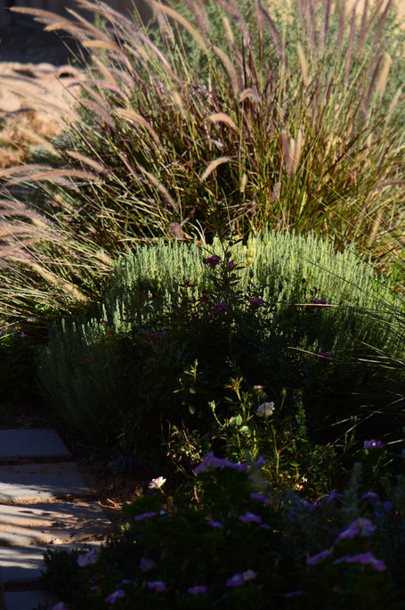 small sunny garden, desert garden, amy myers, tuesday view, autumn bloom