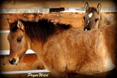 Ojai et sa meilleure amie Paquita, dans le ranch américain - Photo credit N. Cerroni