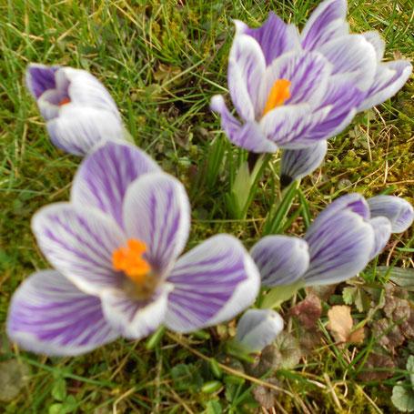 Auch wenn mancher Sommerreifen zu früh aufgezogen wurde, der Frühling ist da.