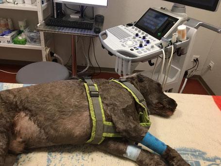 Einer von vielen unvermeidbaren und unterschätzten Kostenpunkten beim Hund: Der Tierarzt!