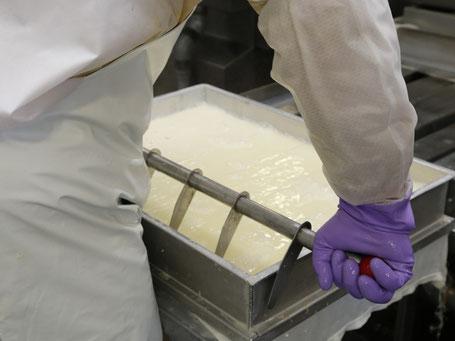 豆腐製造カット工程