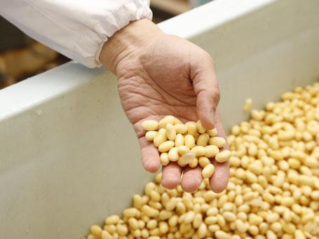 豆腐の原材料である十勝産大豆