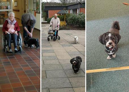Ein Spaziergang macht mit Hund doppelt Spaß!