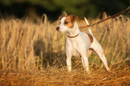Auf das Foto klicken um zum Working-Dog Profil zu gelangen