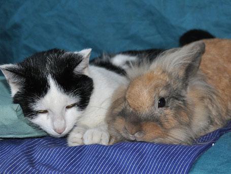 Hundesalon Pfötli - Foto Angebot Katzen und Kaninchen