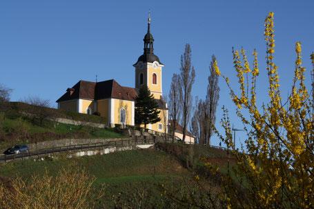 Die Kirche von Kitzeck im Frühling mit blühendem Strauch im Vordergrund