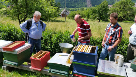 Sieben der Pflegebienen und Erstellen eines Ablegers