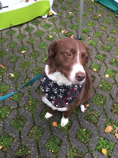Bella, Foto: Plück