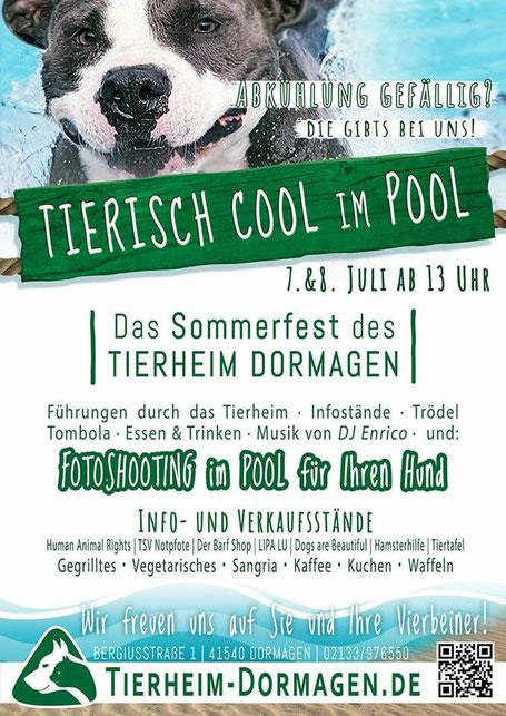 Plakat Tierheim Dormagen