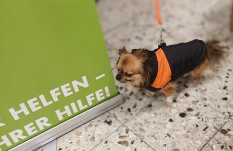 Ein neues Mänteclchen für Winzling Hutsch, Foto: Schumacher