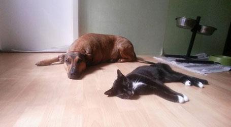 Moca und Ace, Foto vom Halter
