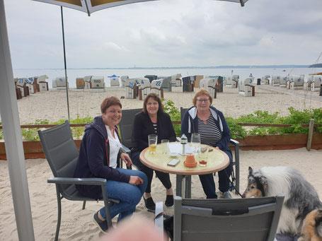 Treffen der Tiertafel RheinErft, Kiel und München