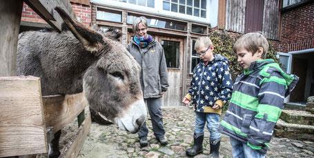 Der Esel des Kindergartens bekommt demnächst einen Artgenossen an die Seite. (Christian Kosak)