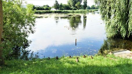 Stralsund Tipps: Enten füttern am Knieperteich