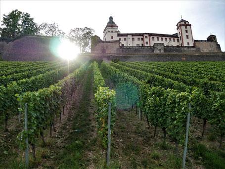 Würzburg Reise Tipps: Durch die Weinberge zur Festung