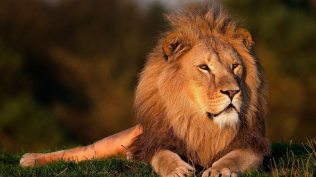Afrika Safari Reise Reisebericht Aberdare