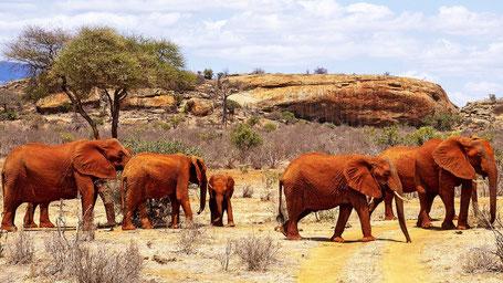 Thailand Kenia Nationalparks