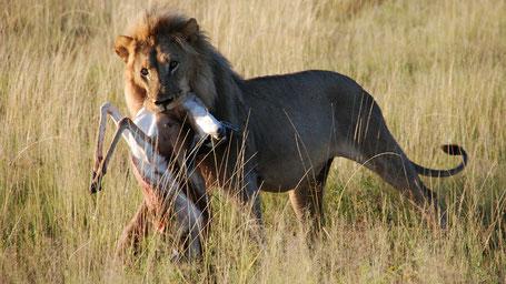 Kenia Tipps Aberdare Nationalpark