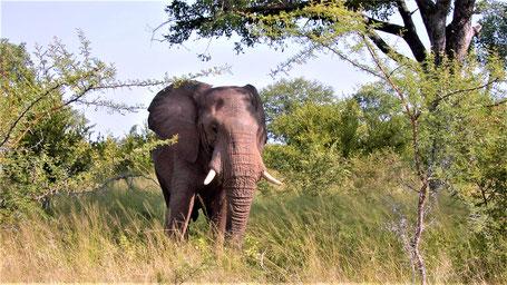 Afrika Safari Reise Die Big Five