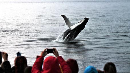 Kanada Osten Rundreise: Wale gucken in Tadoussac