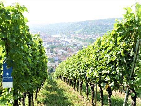 ... durch die fränkischen Weinberge
