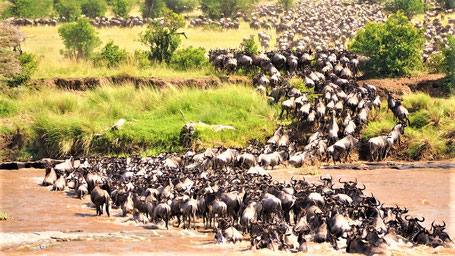 Kenia Rundreise TIpps Nationalparks