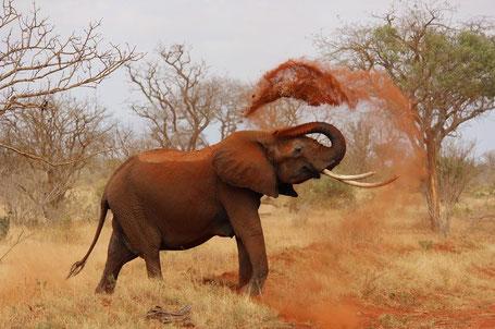 Ein Traum: Wildtier Safari und Retreat Zeit