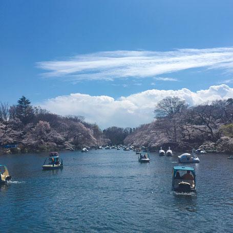 痛くない脱毛サロンDione吉祥寺店 池はボートでいっぱいです