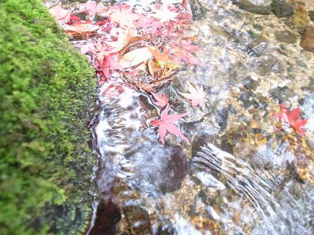 無鄰菴の庭に流れる琵琶湖の疎水から引いた水の画像