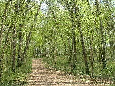 Randonner, Aeylis, gîte, Dordogne, sentier, Périgord