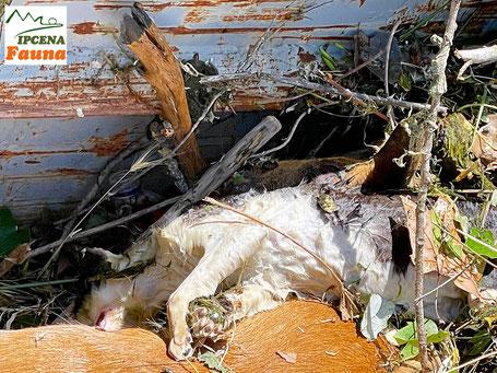 Cadàver d'un gat / 17.05.2021