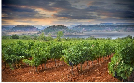 Balade vigneronne en vélo électrique ou VTT électriques Hérault Languedoc Occitanie