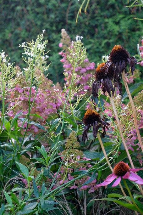 dieartigeGARTEN // Nebel im Herbstgarten - Purpur-Garten mit Echinacea + Rispenhortensie +