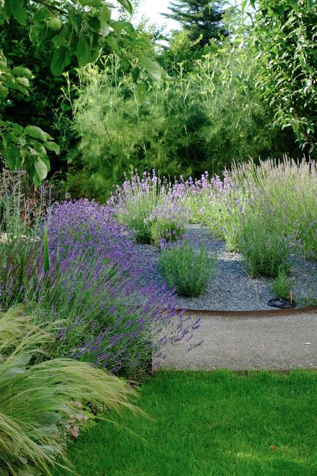 dieartigeGARTEN // Lavener Hill with mixed lavender + fennel