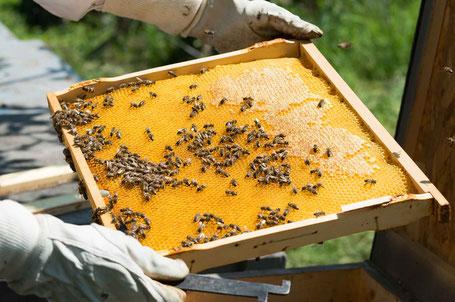 Honig Power Gel von der Biene. Natural Sports Nutrition aus Norddeutschland