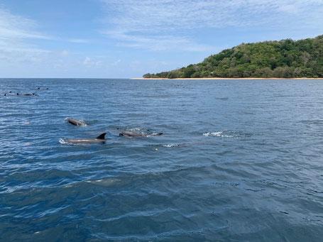 Dolfijnen bij de Banda eilanden op de Molukken